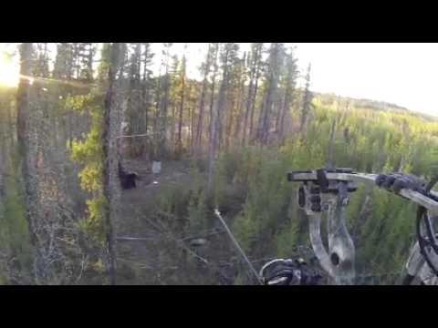 Black Bear Bowhunting