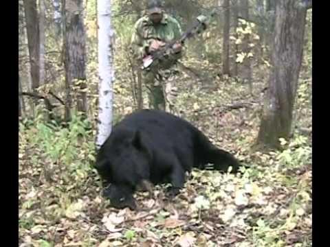400 Pound Black Bear Hunting Alberta