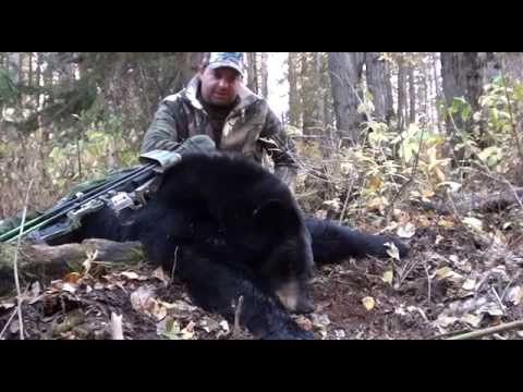 Trophy P&Y Black Bear Hunts