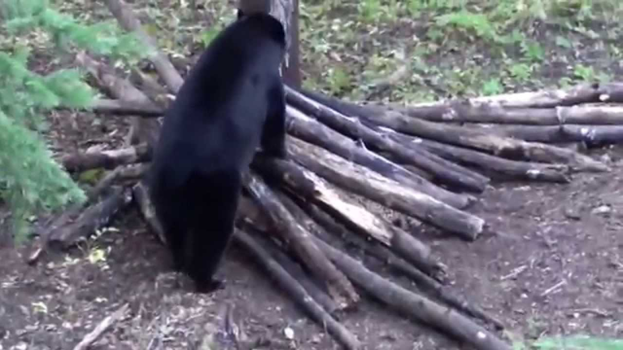 Bear Hunting With Crossbow